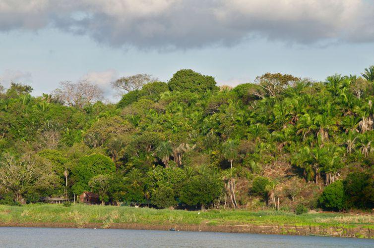NÃO USAR ESSA FOTO!!! DIREITO RESERVADO!!! Visão geral da floresta estudada