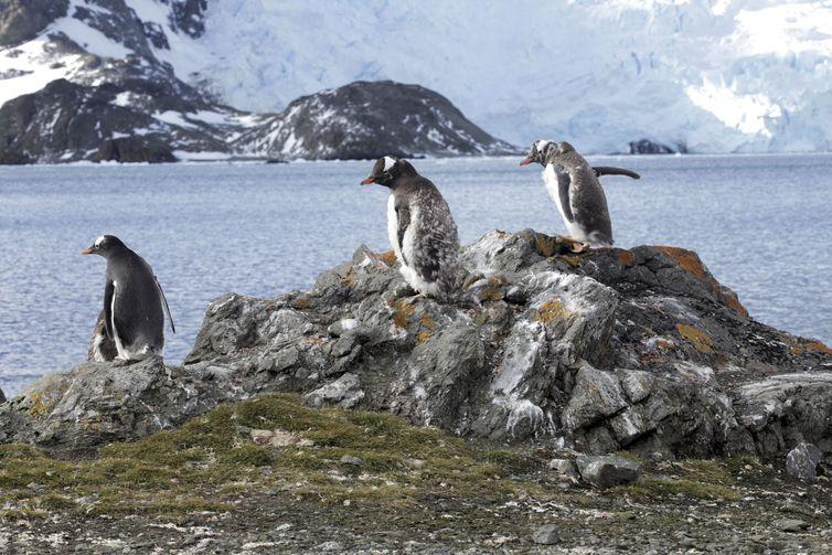 Estação Antártica Comandante Ferraz é uma base antártica pertencente ao Brasil localizada na ilha do Rei George, a 130 quilômetros da Península Antártica, na baía do Almirantado, na Antártida. Na foto, Pinguins.