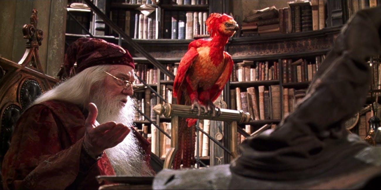 Fofos! As criaturas de Harry Potter e Animais Fantásticos que adoraríamos ter como pets - 2