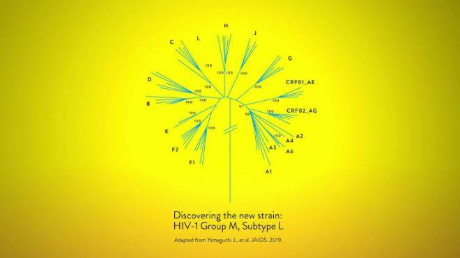 Novo subtipo do vírus HIV é descoberto por cientistas após quase 20 anos - 2