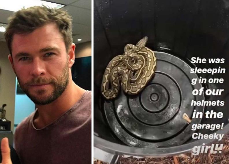 Chris Hemsworth, o Thor, encontra cobra em casa e atitude impressiona os fãs - 1