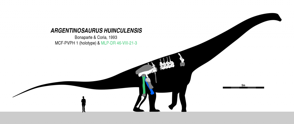 Argentinossauro retoma o posto de maior dinossauro que já existiu - 2