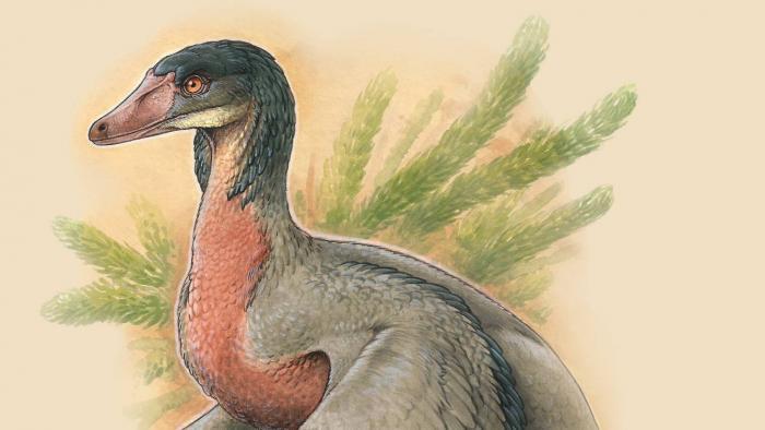 Dinossauro-pássaro que viveu há 90 milhões de anos é descoberto na Patagônia - 1