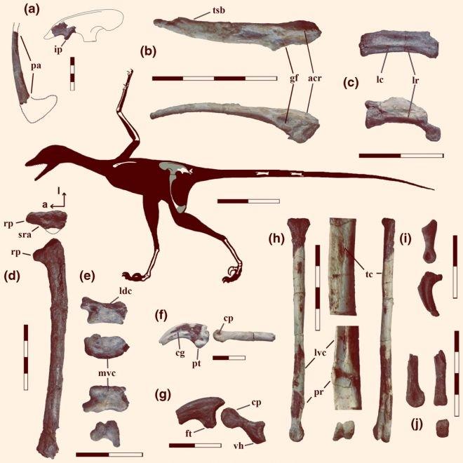 Dinossauro-pássaro que viveu há 90 milhões de anos é descoberto na Patagônia - 3