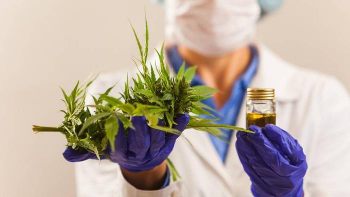 Estresse na pandemia | Pesquisa investigará os efeitos da cannabis em médicos - 1
