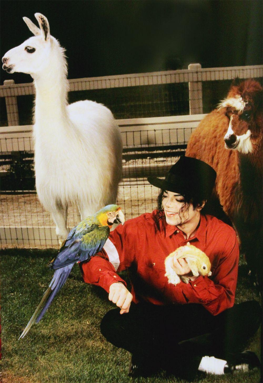 Neverland: partie 9: Le zoo - On Michael Jackson