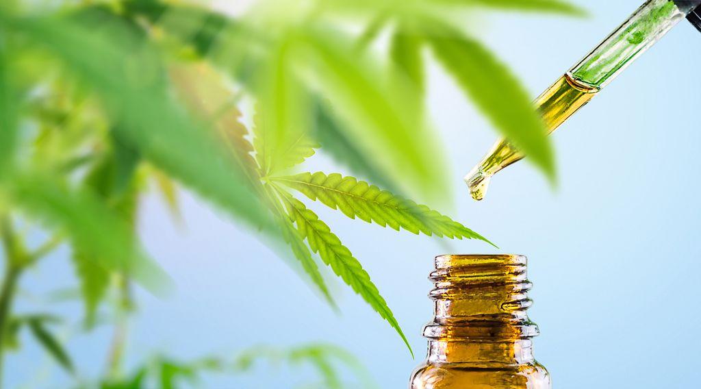 Como a cannabis pode ajudar no tratamento da COVID-19? - 3