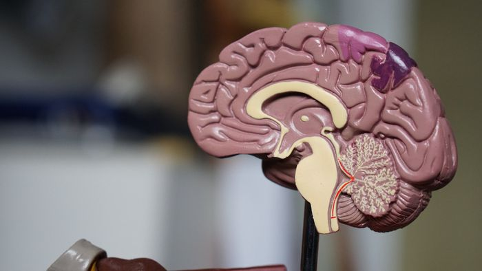 A caminhada brasileira da Interface Cérebro-Máquina - 1
