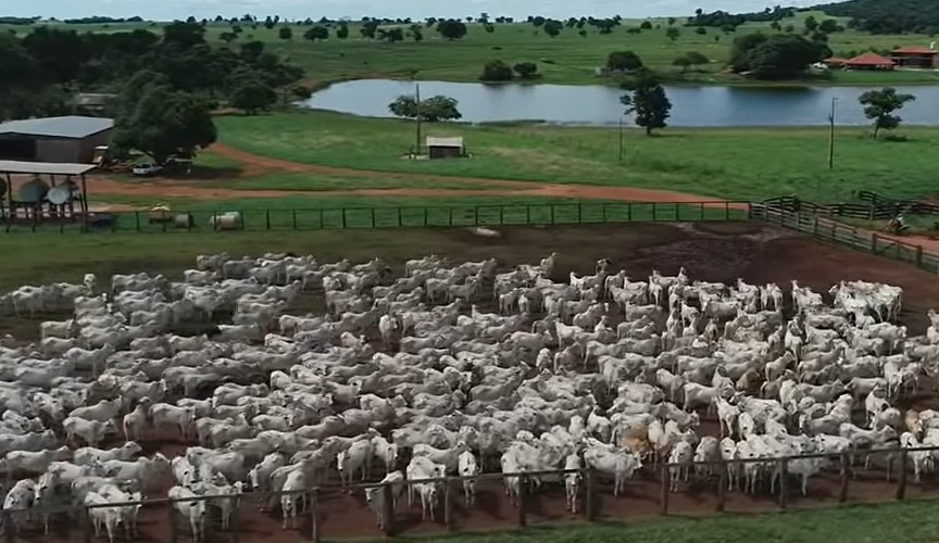 Descubra porque Amado Batista está vendendo suas fazendas por R$ 350 milhões! - 3