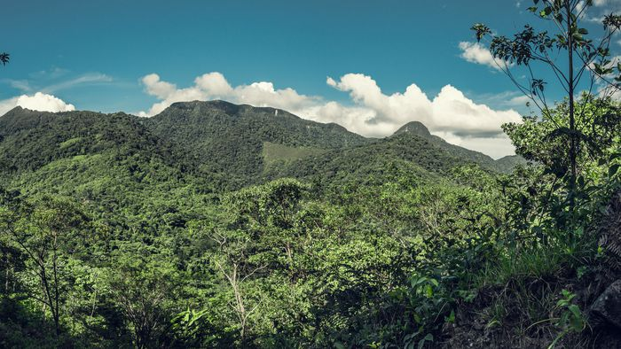 Indígenas usam sistema de alerta precoce para combater desmatamento na Amazônia - 1