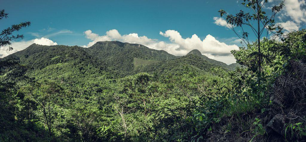 Indígenas usam sistema de alerta precoce para combater desmatamento na Amazônia - 2
